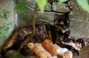 cat with litter of kittens
